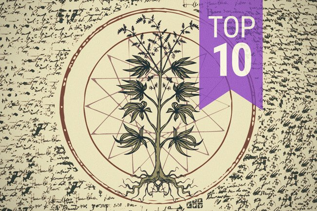 Top 10 Wrong Myths About Cannabis