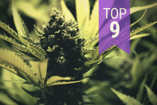 Top Fastest Growing Cannabis Seeds (By Categories)