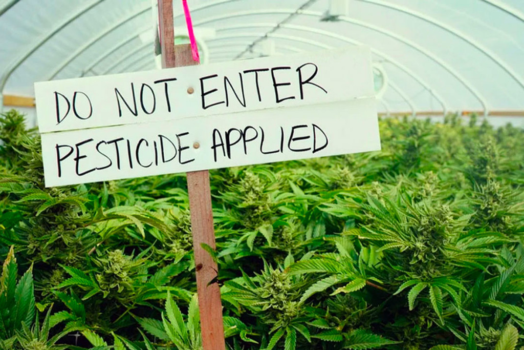 Pesticides May Be Contaminating Your Weed, Here Are Some Alternatives