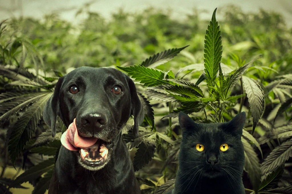 Cats, Dogs and Cannabis: How To Keep Your Furry Friends Out Of The Garden