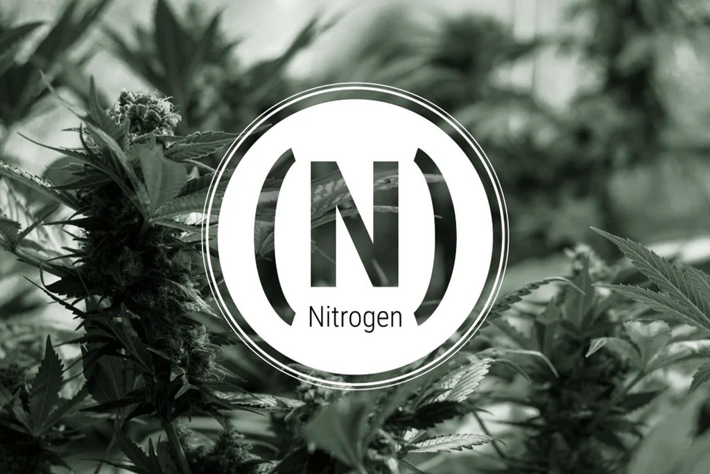 Nitrogen Deficiency In Cannabis Plants
