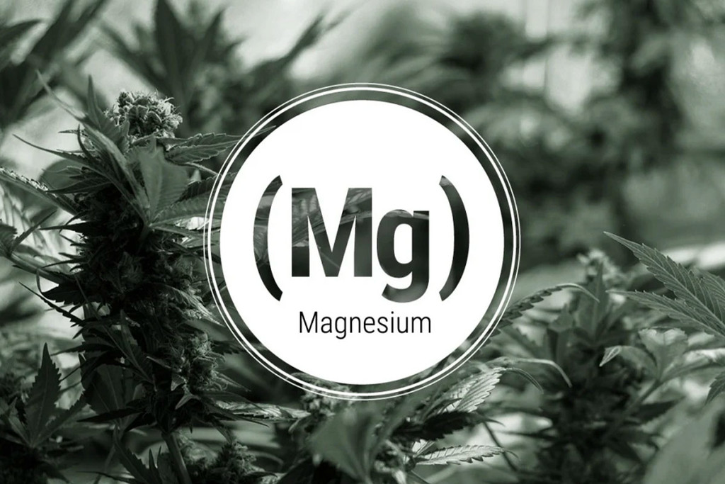 Magnesium Deficiency In Cannabis Plants