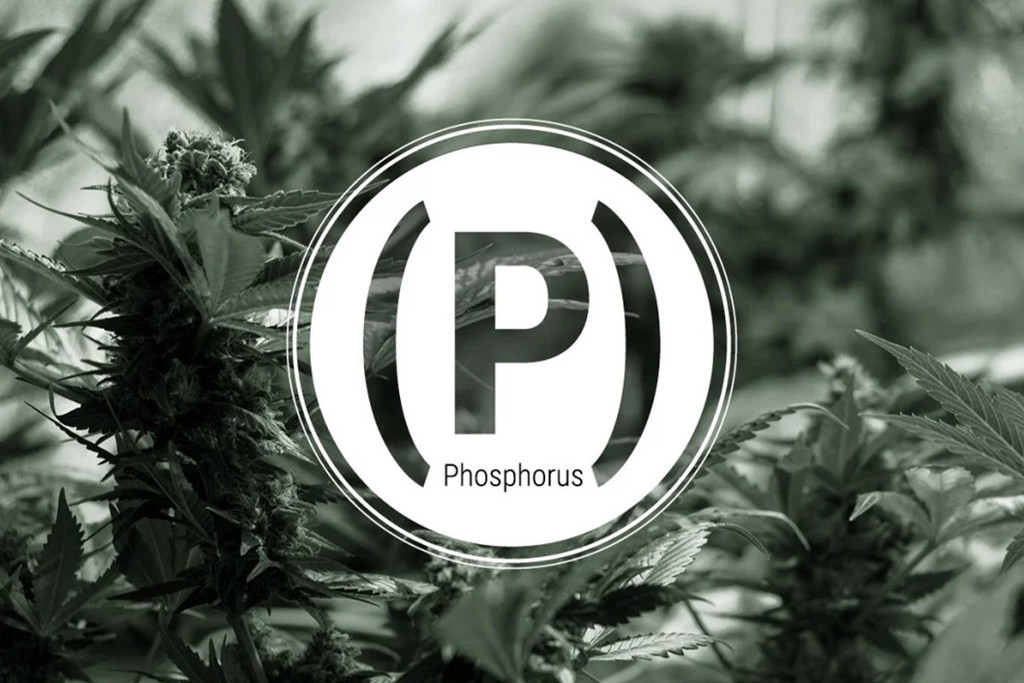 Phosphorus Deficiency In Cannabis Plants