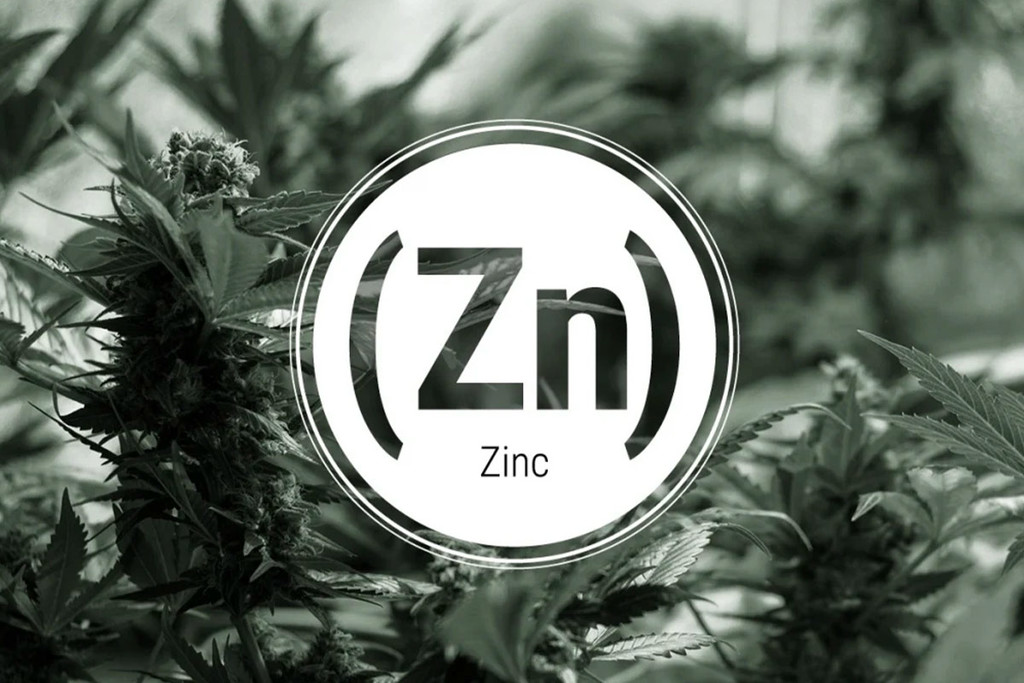 Zinc Deficiency In Cannabis Plants