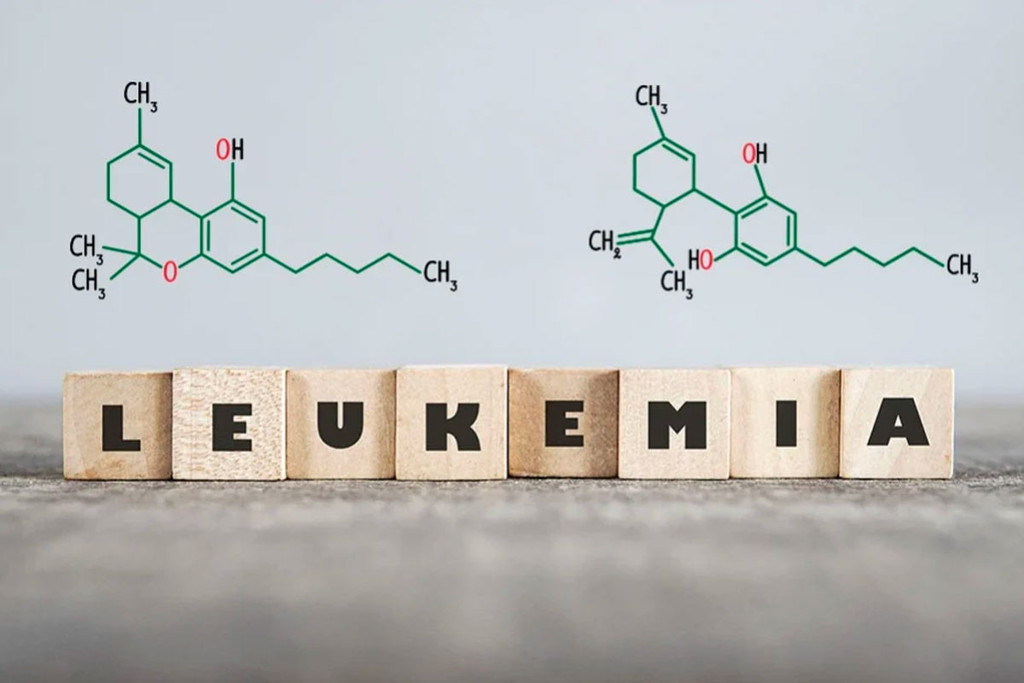 The Role Of Cannabis In The Treatment Of Leukemia