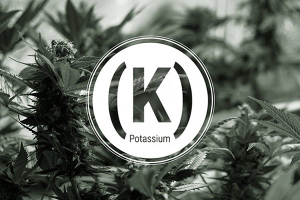 Potassium Deficiency In Cannabis Plants - A How-To Guide