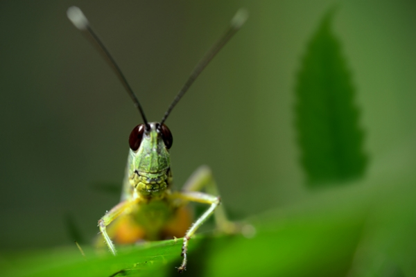 Keep Crickets Away From Your Cannabis Plants
