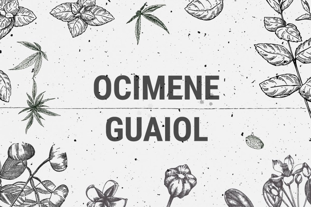 Cannabis Terpenes: Ocimene And Guaiol