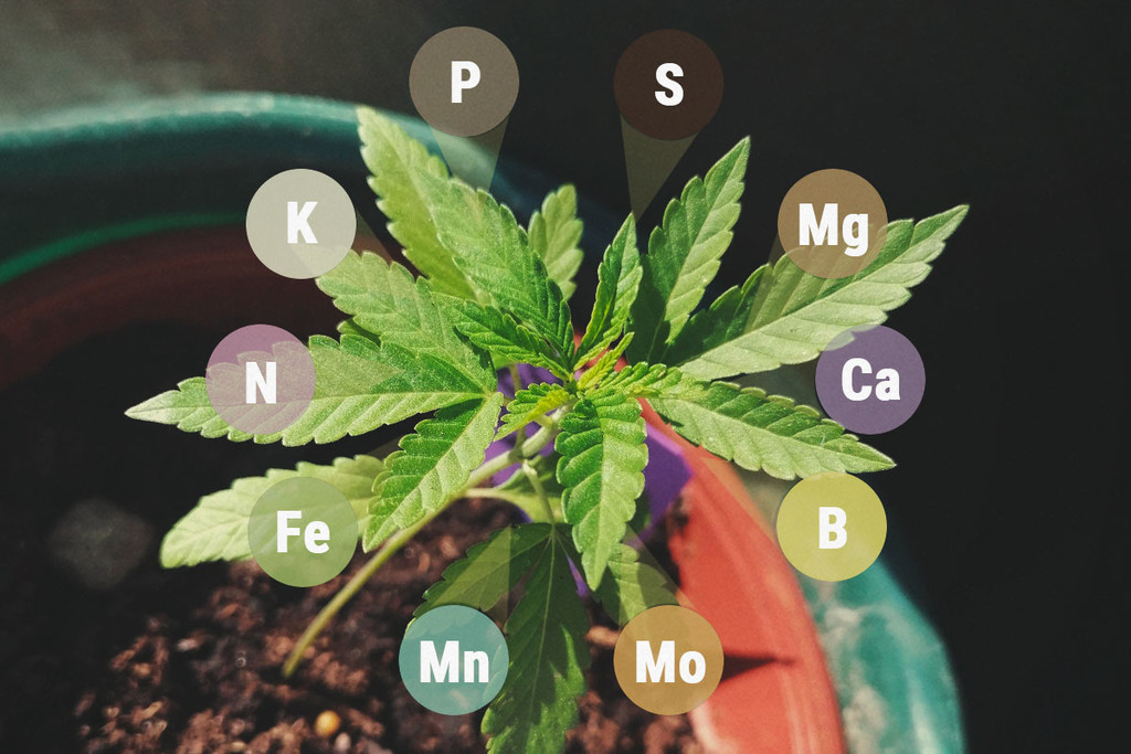 Macronutrients And Micronutrients In Cannabis