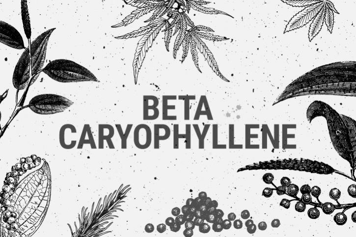 Beta-Caryophyllene: A Terpene Against Anxiety And Depression?