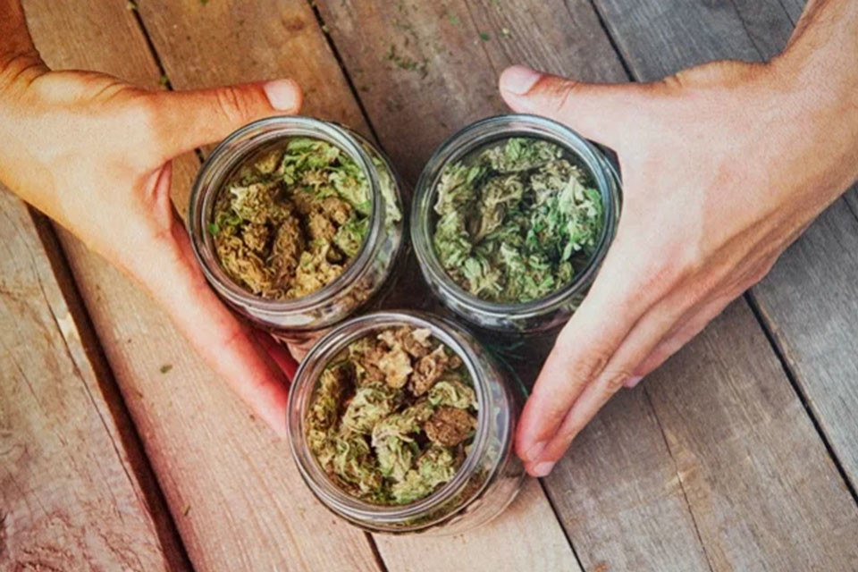 What Happens When You Mix Different Cannabis Strains Together?