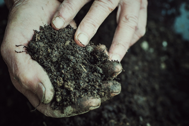 How To Save Money By Reusing Old Soil