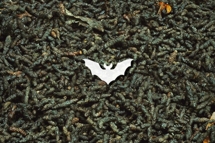 Bat Guano: The Cannabis Superfood Rich In Macro And Micronutrients