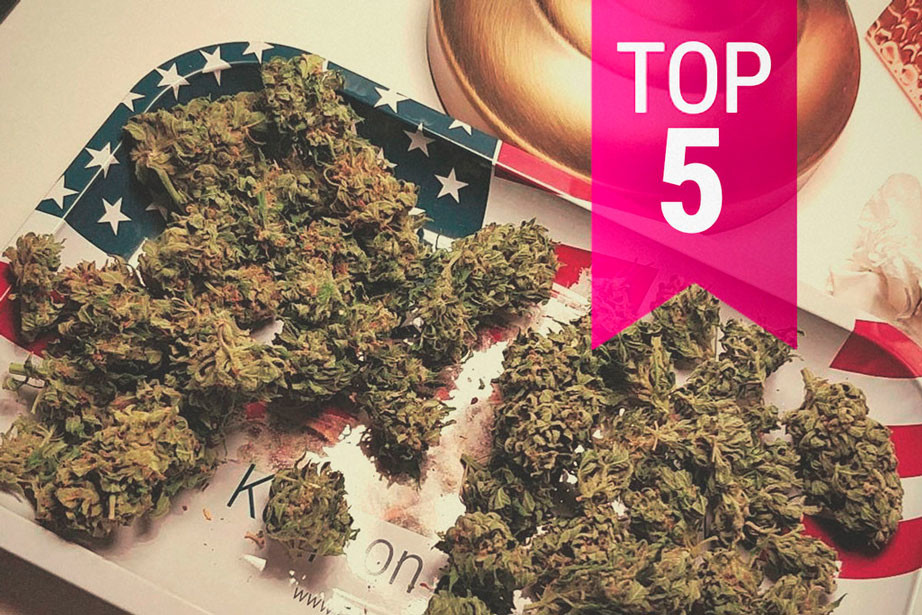 The 5 Most Potent Sativa Cannabis Strains Available In 2020