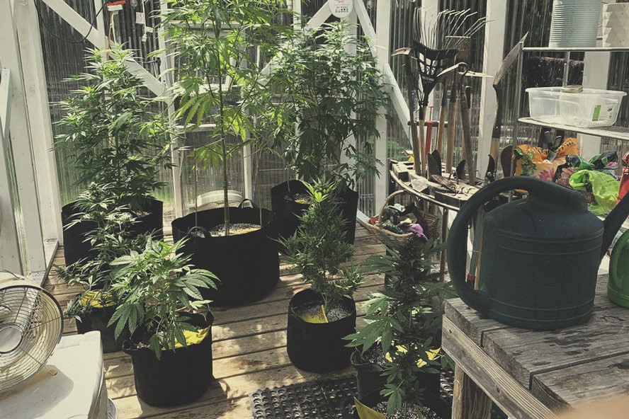 Building The Best Greenhouse For Marijuana