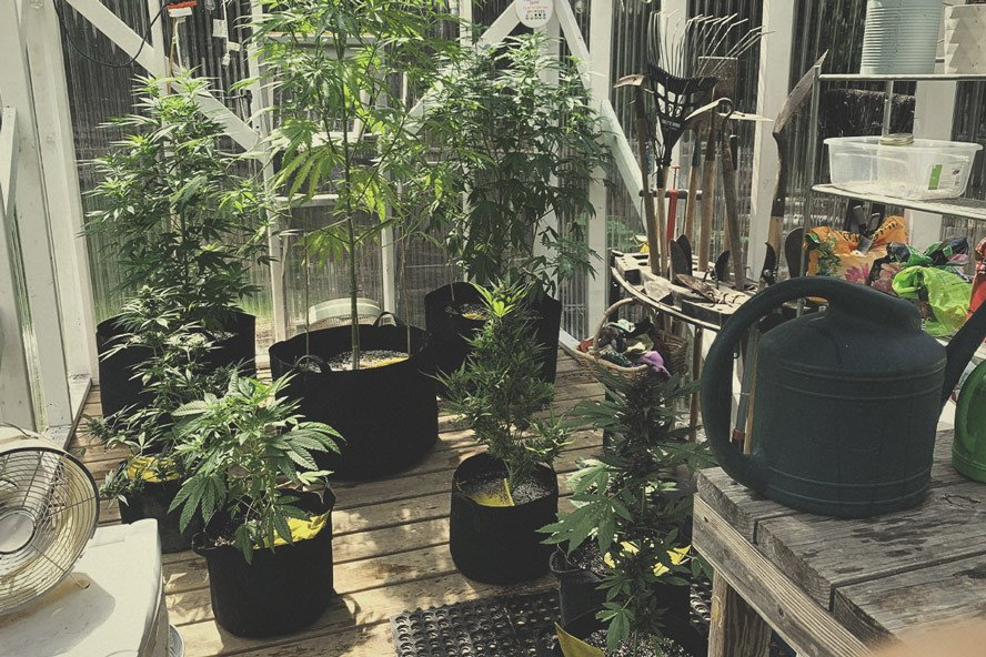 How To Build the Best Greenhouse for Growing Marijuana