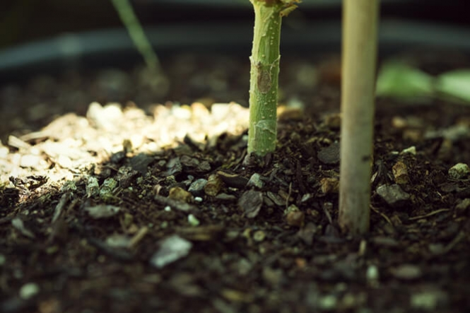 Choosing The Best Soil For Cans A Home Grower S Guide Rqs Blog