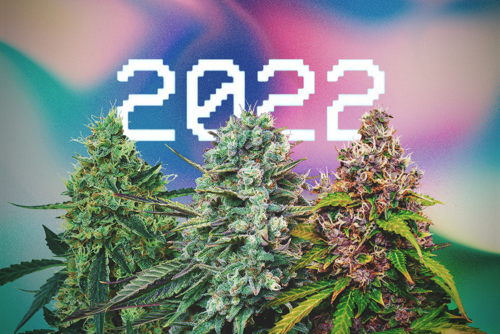 The 2021 RQS New Cannabis Strains