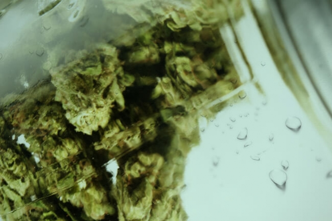 Water Curing Your Weed