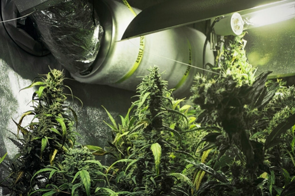 How To Use Carbon Filters In Your Cannabis Grow Room