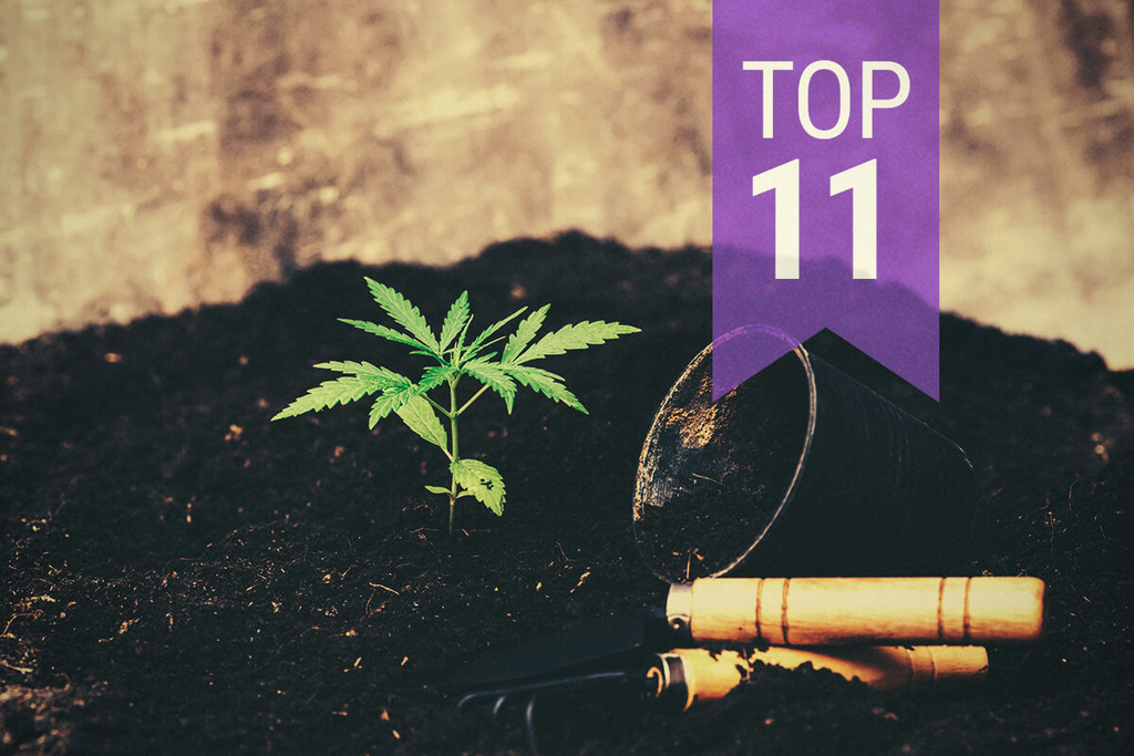 Top 10 biggest mistakes made by cannabis growers