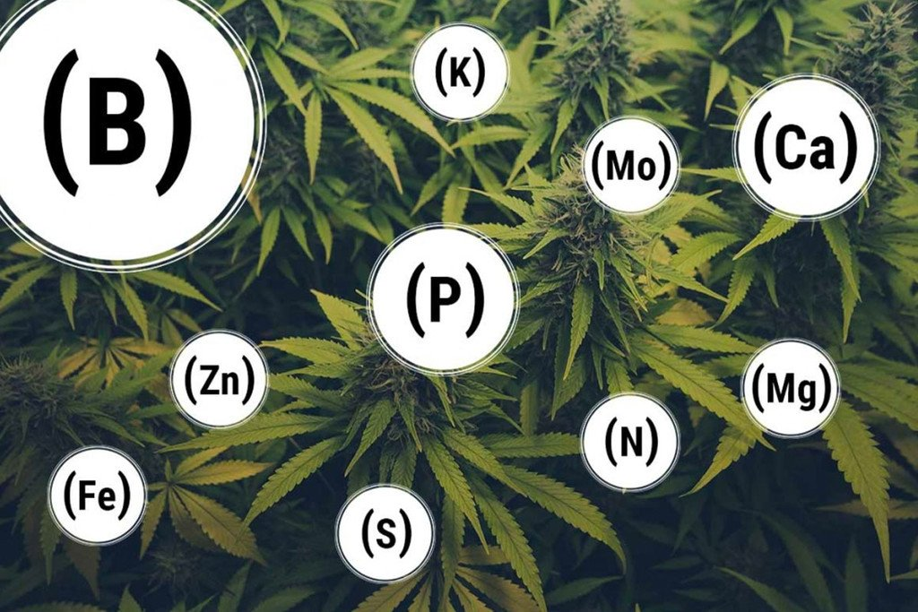 Cannabis Nutrient and Deficiency Table