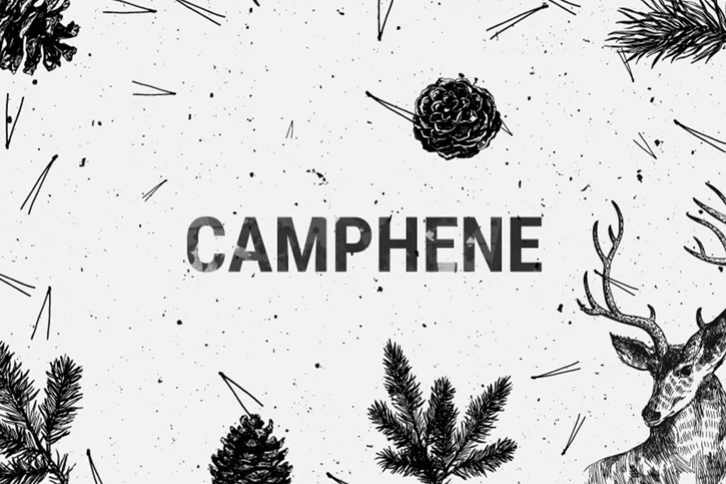 Camphene - A Minor Terpene With Big Medicinal Potential