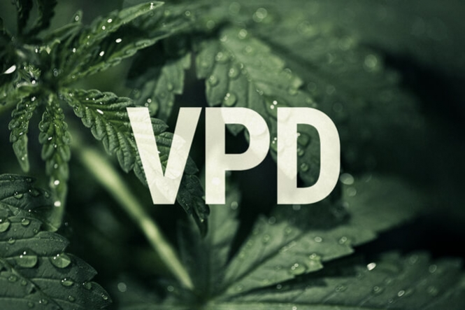 VPD: How Can Vapour Pressure Deficit Boost Cannabis Yields?