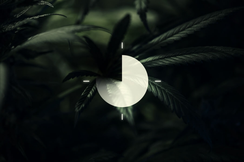 The Importance Of The Dark Cycle In Cannabis Cultivation