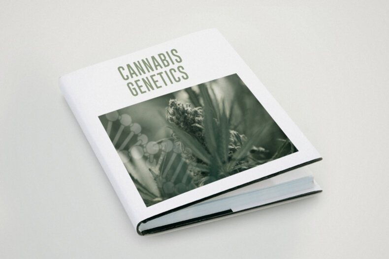 Cannabis Terms Defined and Explained: A Glossary