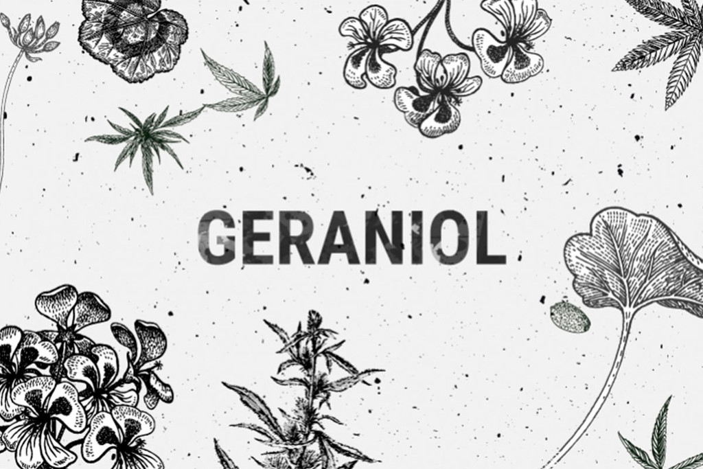 Geraniol: A Terpene With Diverse Therapeutic Potential