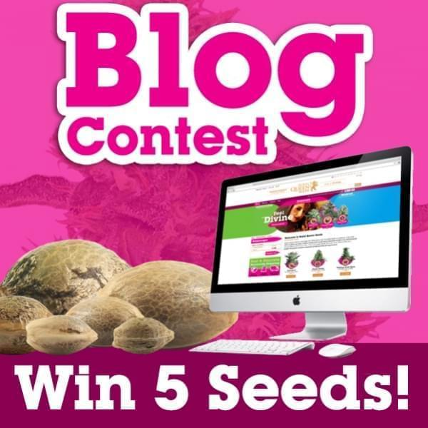 Write a Blog and receive 5 free cannabis seeds
