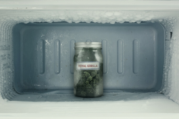 Can You Really Freeze Cannabis?