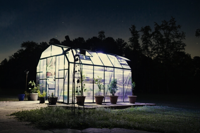 Lighting Considerations For Growing Cannabis In A Greenhouse