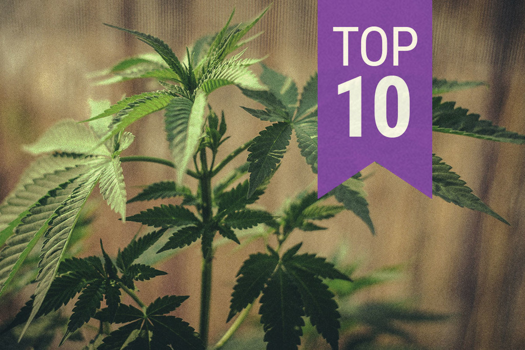 10 Tips for Growing Cannabis