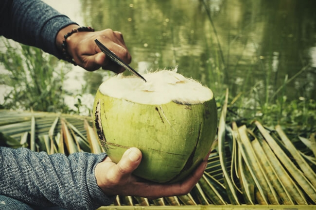 Can You Fertilise Cannabis With Coconut Water?