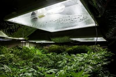 lampe 250w cannabis