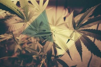 Cannabis And Breastfeeding: How Cannabinoids Affect A