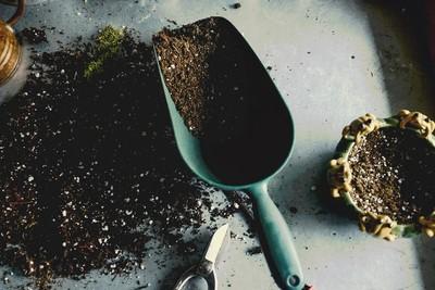 Molasses: An Excellent Supplement For Cannabis Plants - RQS Blog