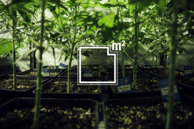 The Pros and Cons of Growing Different Strains in One Grow Room