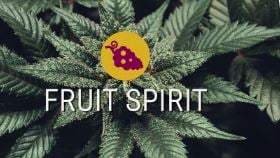 Fruit Spirit
